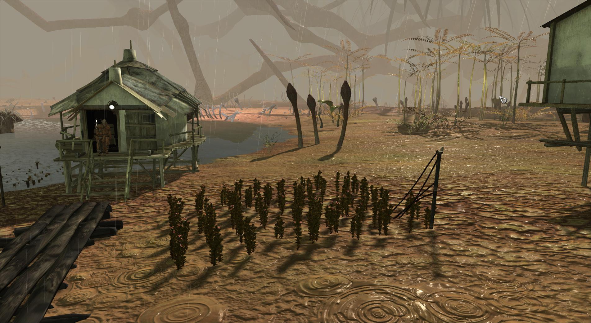 swamp2